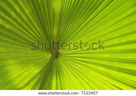 palm leaf macro - stock photo