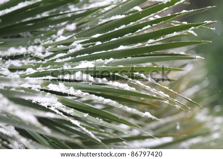 Palm leaf under snow - stock photo