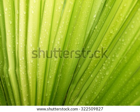 palm leaf with water drop - stock photo