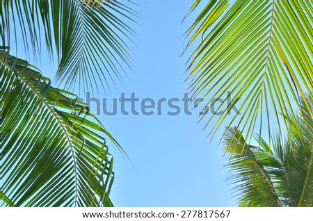 Palm leafs over blue sky background  - stock photo