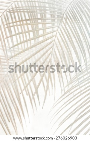 palm leaves abstract background - stock photo