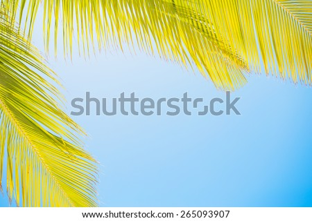Palm leaves on clear blue sky - stock photo