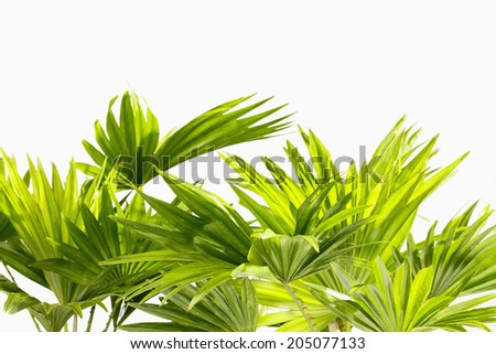 Palm leaves on white background - stock photo