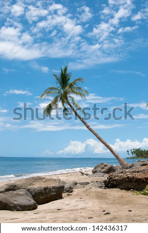 Palm near the ocean coast, maui, hawaii - stock photo