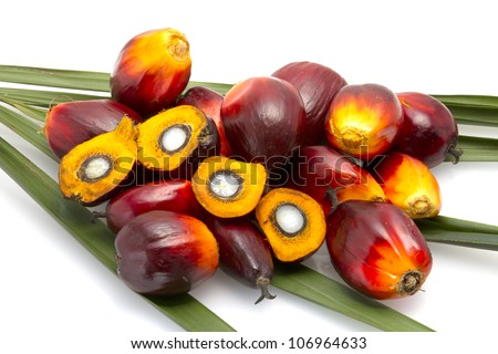 palm oil fruit - stock photo