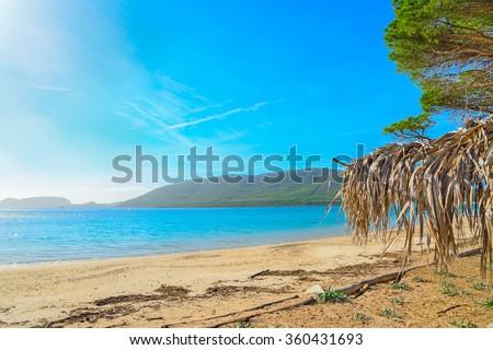 palm parasol in Mugoni beach, Sardinia - stock photo