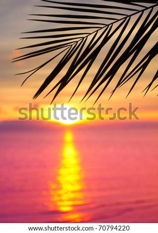 Palm Sea Paradise - stock photo