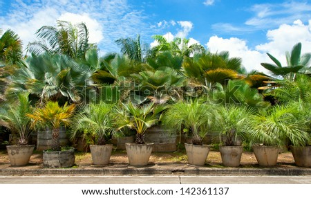 Palm side of the road. - stock photo