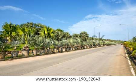 Palm side of the road - stock photo