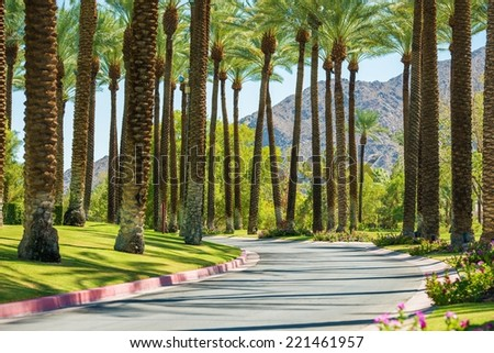 Palm Springs Road, California, United States. Palm Trees. - stock photo
