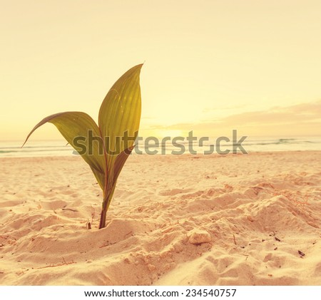 Palm sprout on tropical beach - stock photo