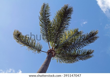 Palm Tree Against a Blue Sky - stock photo
