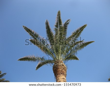 Palm tree against blue sky - stock photo