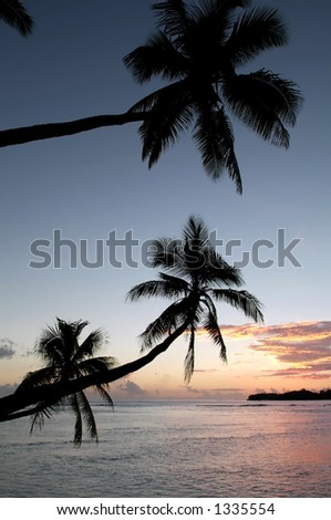 palm tree against sunset - stock photo
