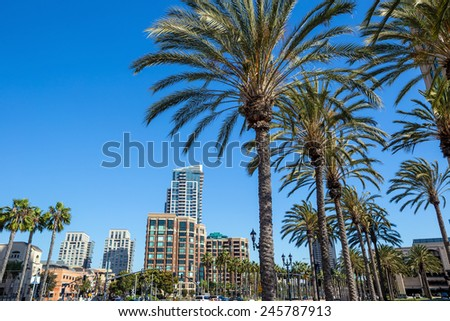 Palm tree and San Diego city - stock photo