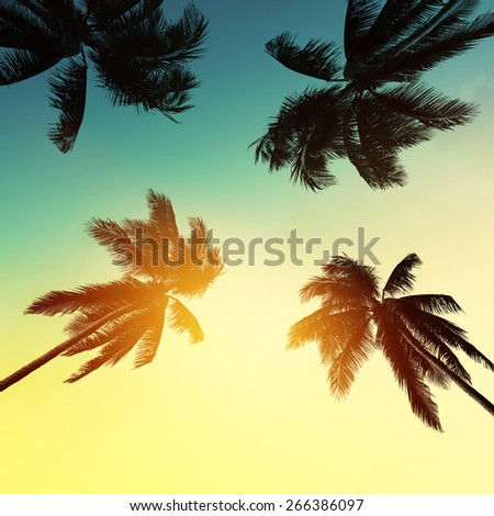 Palm tree at sunset on california - stock photo