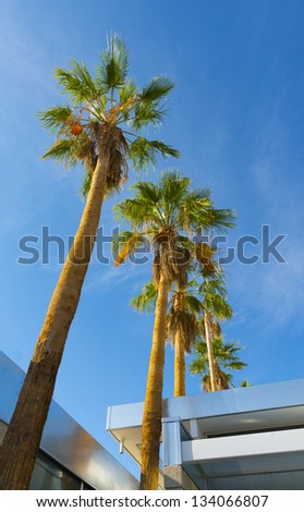Palm Tree at The House - stock photo