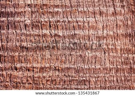 Palm tree. Background texture of tree bark. - stock photo