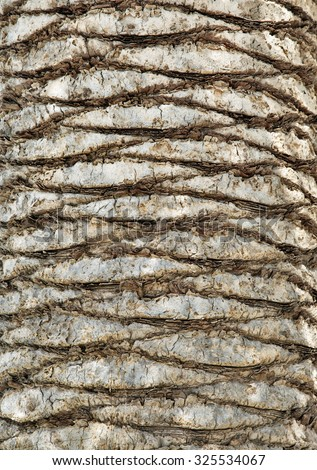 Palm tree bark for texture or background - stock photo