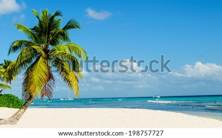 Palm tree entering the ocean on one of the most exotic caribbean beach - stock photo