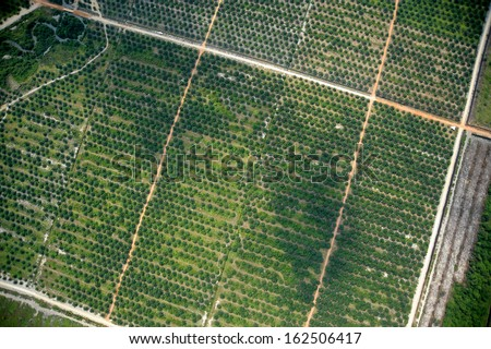 palm tree farm vertical view - stock photo