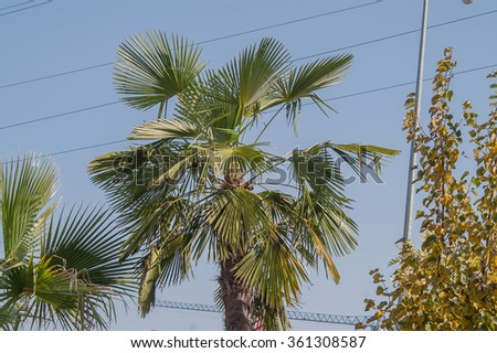 palm tree growing in the city streets - stock photo