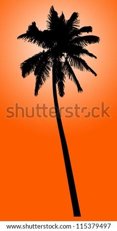Palm tree illustration - stock photo