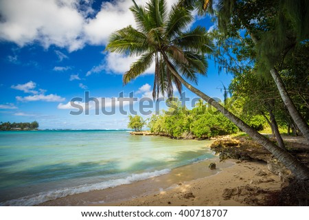 palm tree in a nice quiet bay, oahu, hawai'i - stock photo