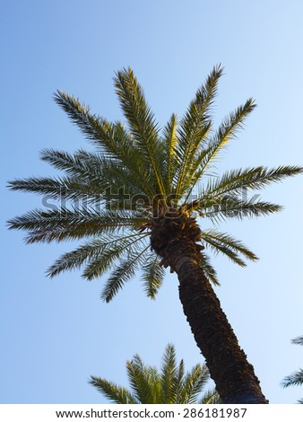 Palm tree in sunset over blue sky background - stock photo