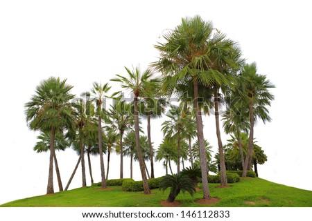 Palm Tree isolated - stock photo