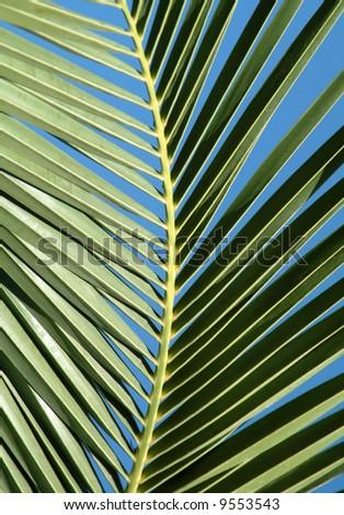 Palm tree leaf on the blue sky - stock photo