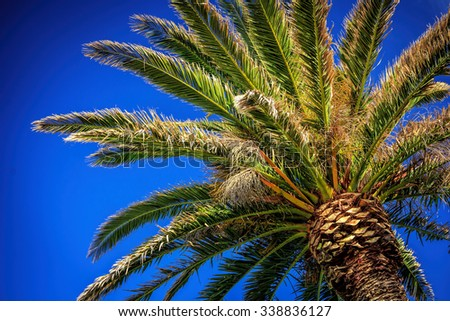 palm tree, location - New Zealand - stock photo