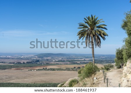 Palm tree near Almodovar del Rio Castle, arab fortress built in 740 on an old building in early times near Cordoba, Andalusia, Spain. - stock photo