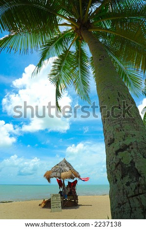 palm tree on a beautiful tropical beach - stock photo