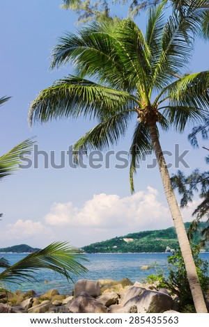 Palm tree on a rocky shore. Southeast Asia - stock photo