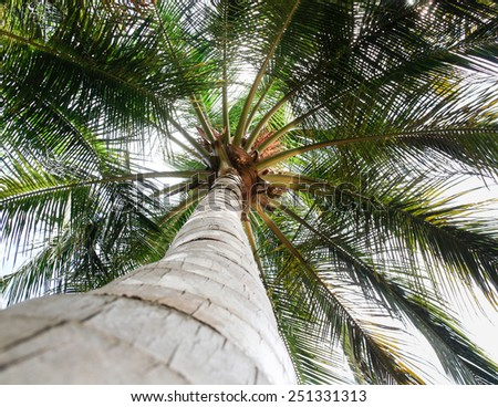 Palm tree on a summer day with amazing branches - stock photo