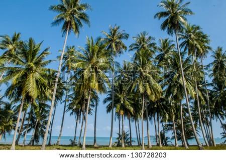 Palm tree on a white sand beach - stock photo