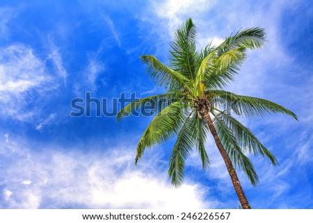 Palm tree on blue sky - stock photo