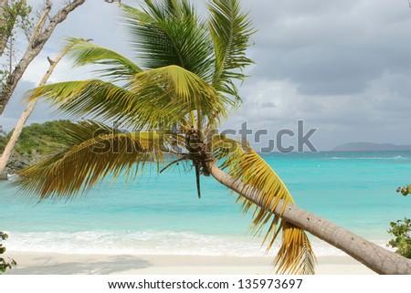 Palm tree on the beach. - stock photo