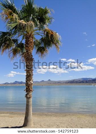 Palm Tree on the Beach - stock photo