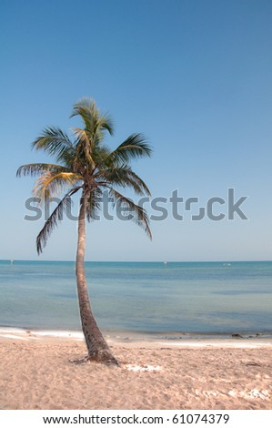 Palm tree on the beach in Key West Florida - stock photo