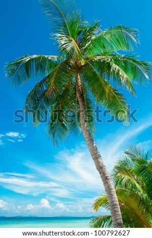 Palm tree on the beach, Phi-Phi Island, Thailand - stock photo