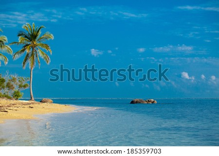 palm tree on the shore of the Indian Ocean Sri lanki. Stone  in water on the beach Pasikuda - stock photo