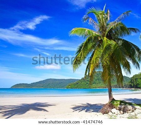 Palm tree on the tropical beach near sea water with sky background - stock photo