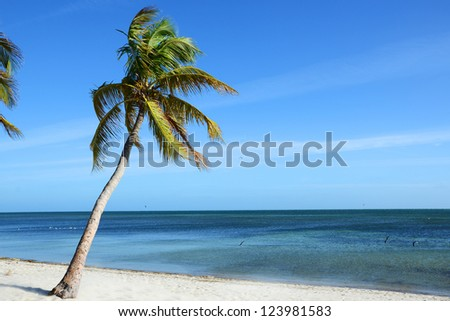 Palm Tree on Tropical Beach, Key West, Florida, USA - stock photo