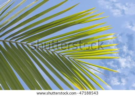 Palm tree over blue tropical sky - stock photo