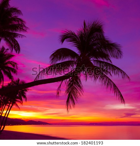 Palm tree silhouette at sunset on tropical beach - stock photo