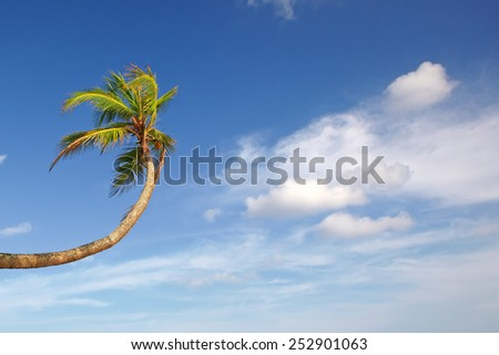 Palm tree stretches up to the white clouds in the blue sky - stock photo