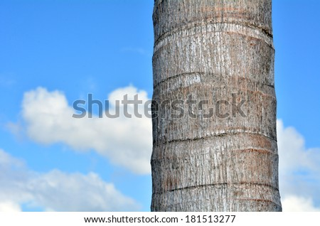 Palm tree trunk against blue sky with white tropical clouds in the background. Concept photo of travel and vacation - stock photo