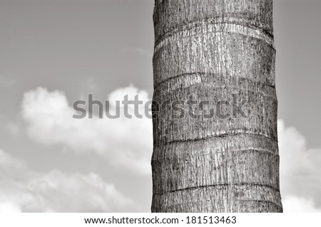 Palm tree trunk against blue sky with white tropical clouds in the background. Concept photo of travel and vacation (BW) - stock photo